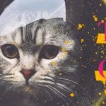Those Cool Cats Blog Cover